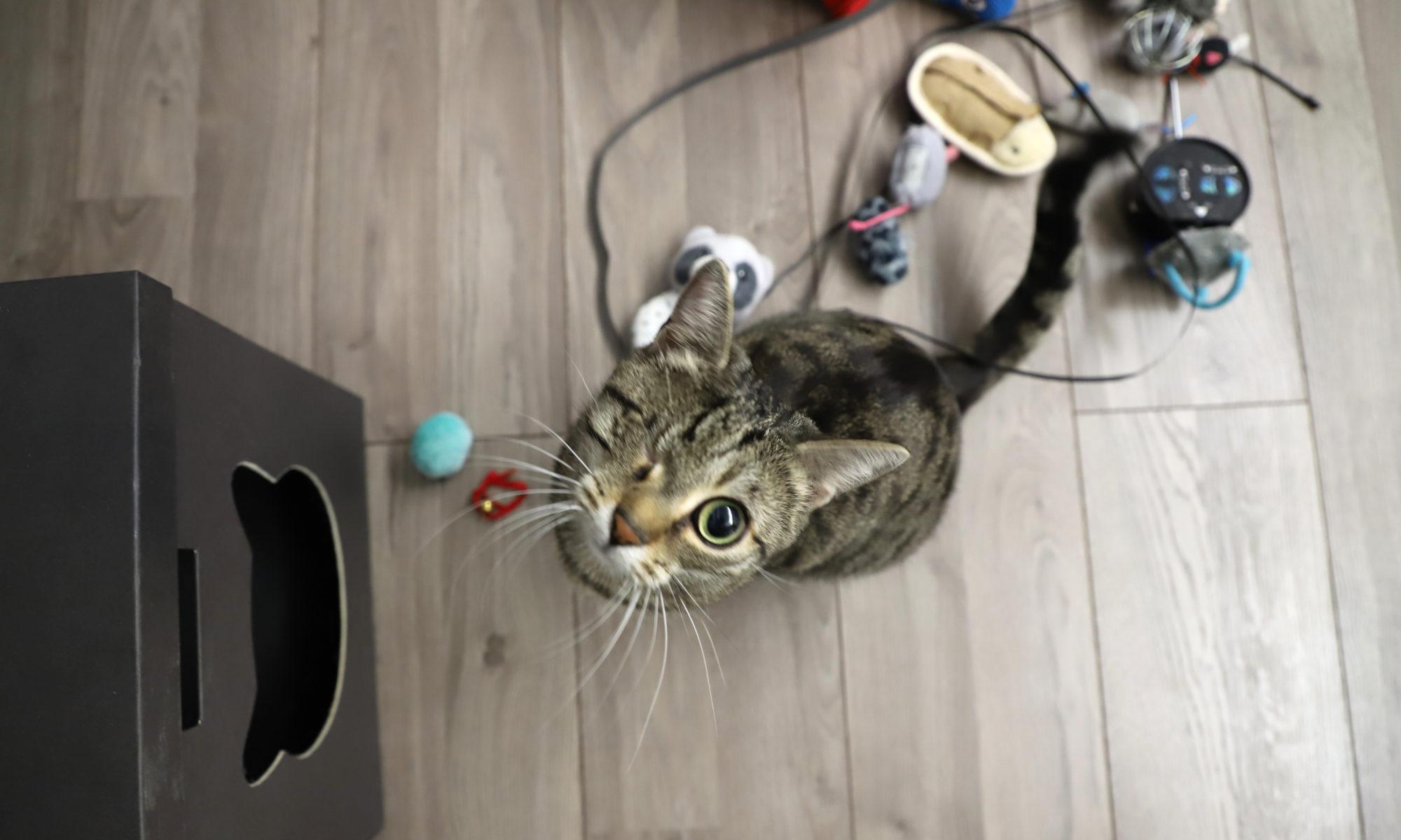 Gutes Katzenspielzeug